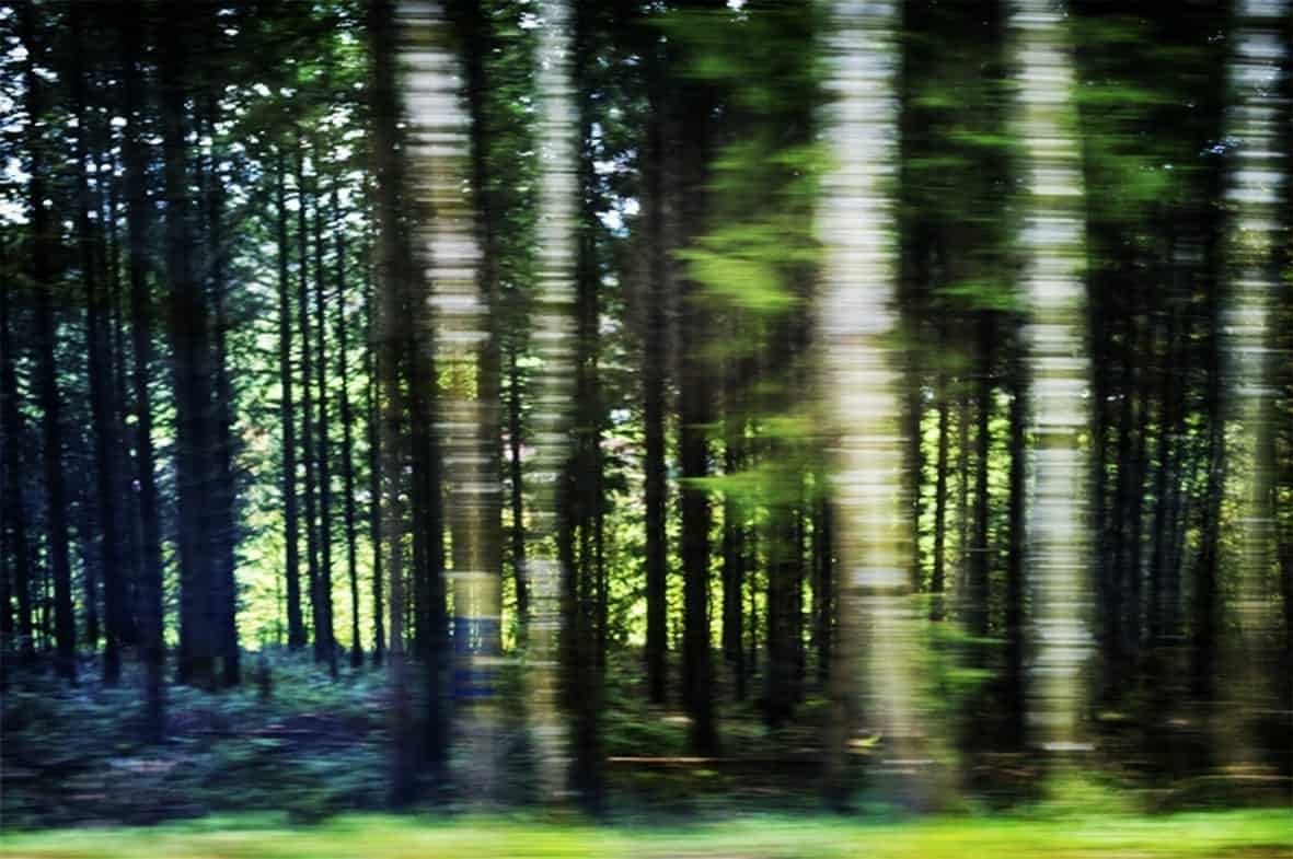 El-bosque movido_Fotografia